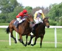 Acertijo el anciano y la carrera de caballos