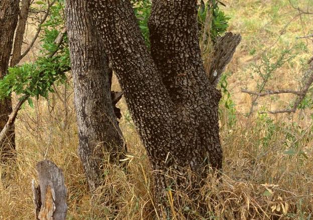 Animal escondido. Ilusión visual