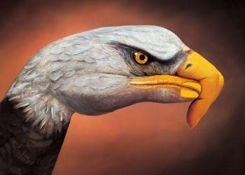 Águila-pintada-en-la-mano