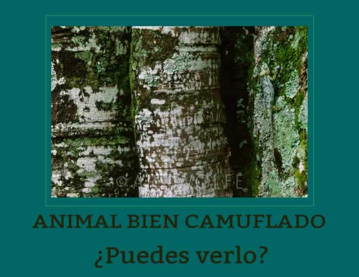 animal-camuflado-news64