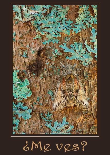 animal-camuflado
