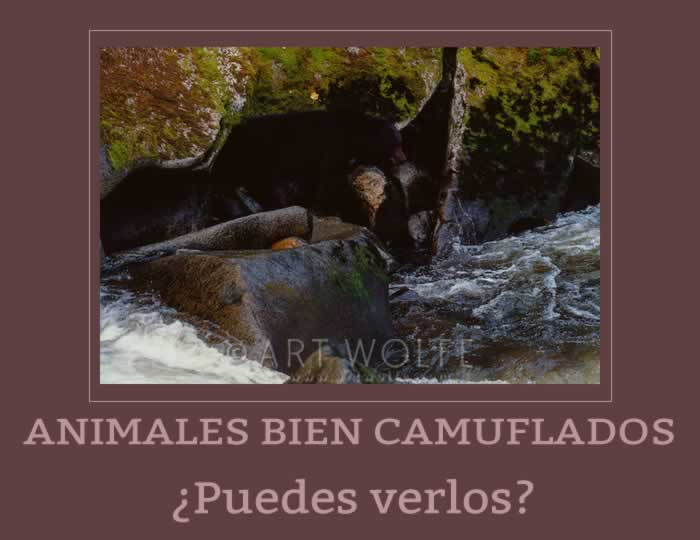 Animales camuflados en su habitat natural