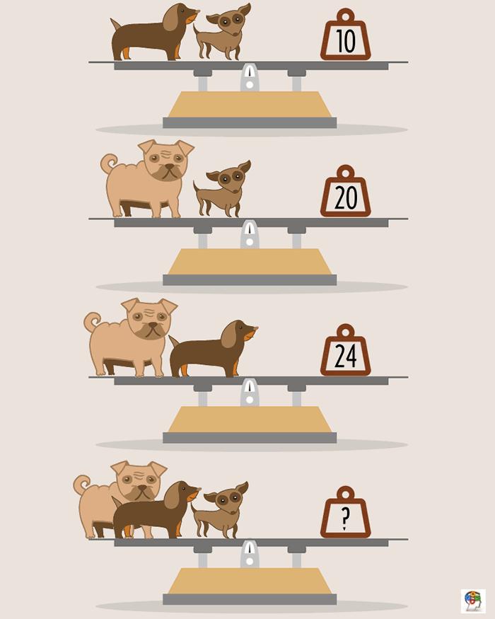 Pesando mascotas