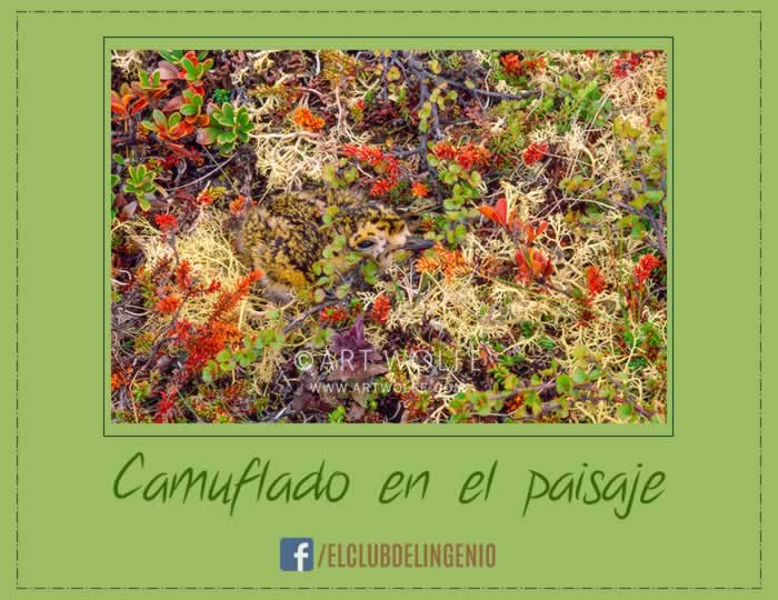 Camuflaje natural para entrena la percepción visual