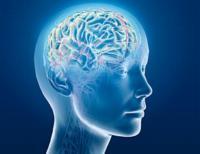 cerebro-ganador