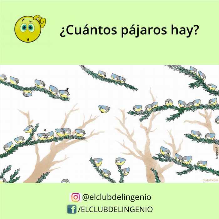 Entrena la percepción visual contando pájaros