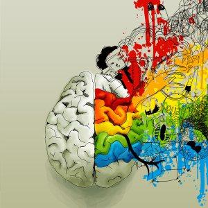 cuarto-principio-rector-del-cerebro