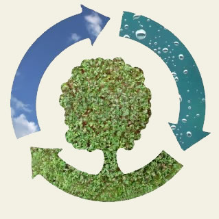 Crucigrama-ecologia