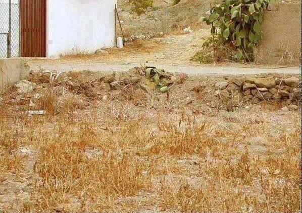 Ilusión visual: el gato escondido