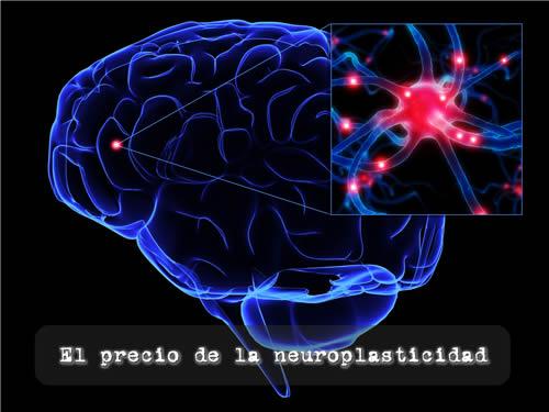 el-precio-de-la-neuroplasticidad