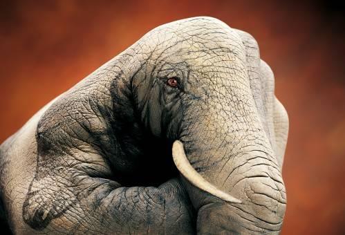 elefante-pintado-en-las-manos