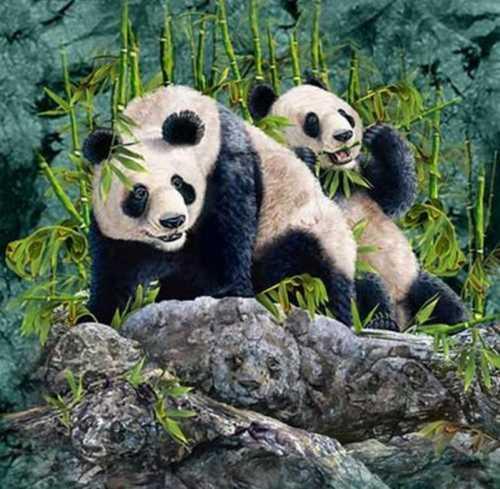 encuentra-los-panda
