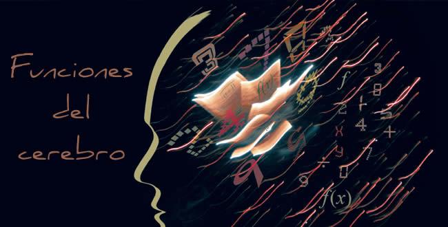 funciones-del-cerebro