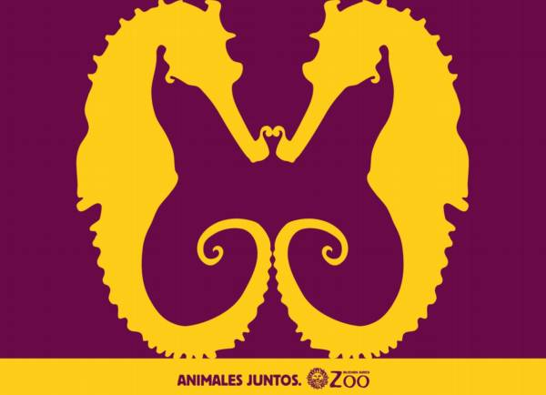ilusion-mariposa