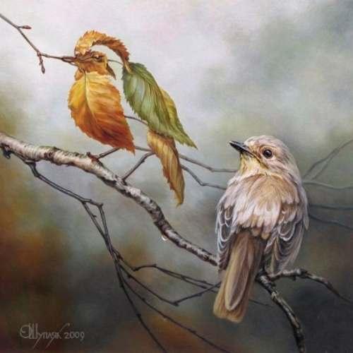 Ilusión visual. Pájaros