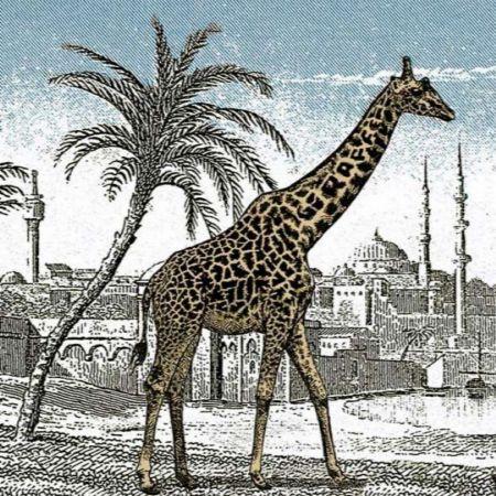 Ilusión visual de la jirafa
