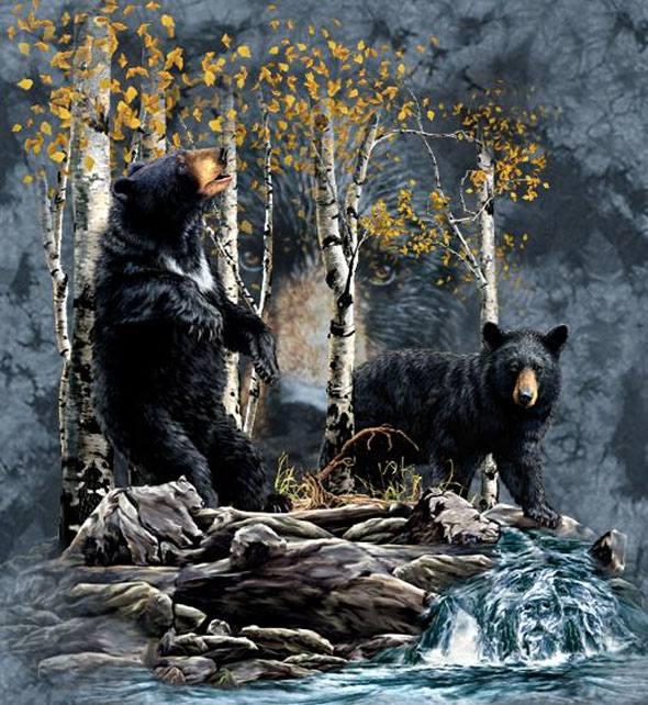 osos-escondidos