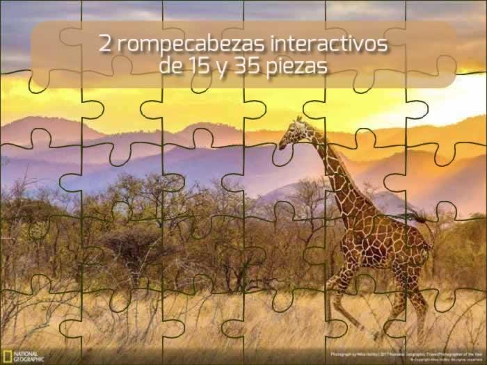 2 rompecabezas interactivos de 15 y 35 piezas: una jirafa en Kenya