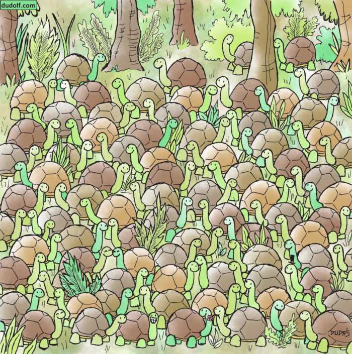 Muchas tortugas y una serpiente escondida