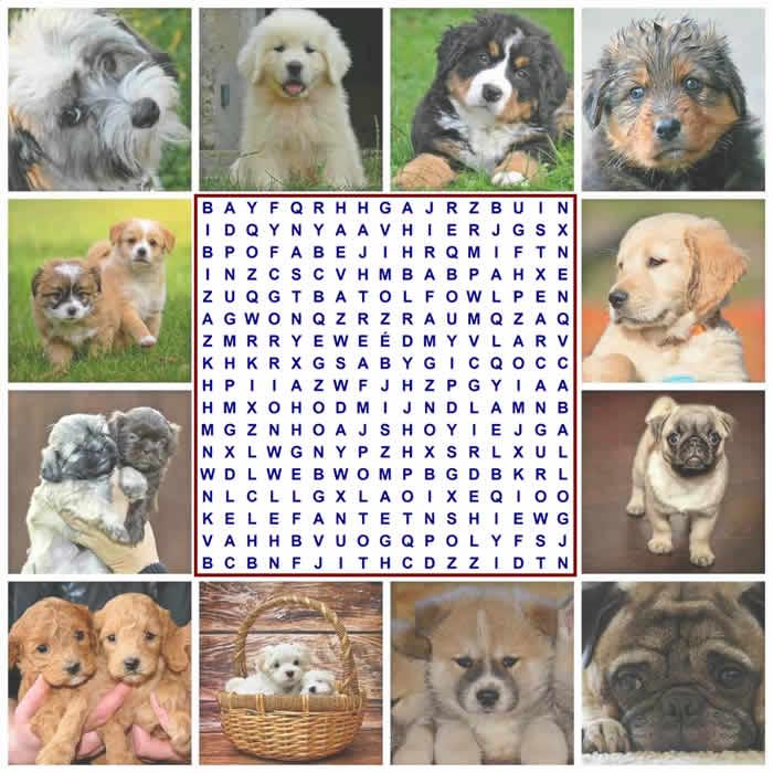 Sopa de letras temática: animales