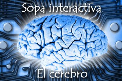 Sopa temática: el cerebro
