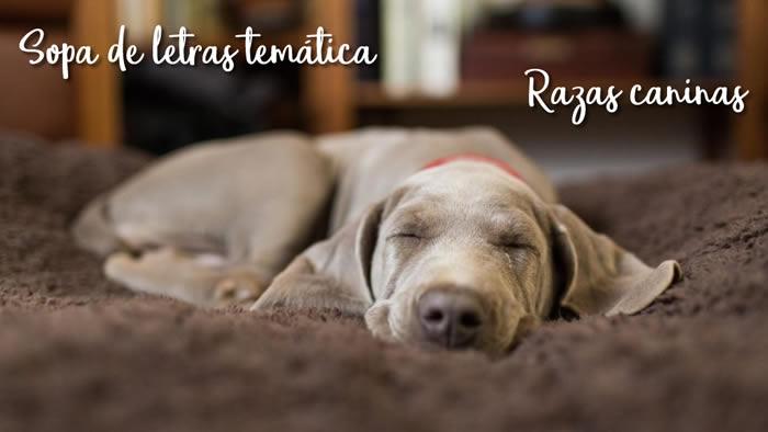 Sopa de letras temática: razas caninas