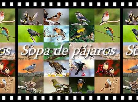 Sopa interactiva con nombres de pájaros