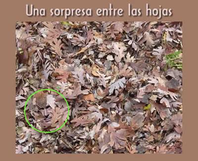 sorpresa-entre-las-hojas-mostrar