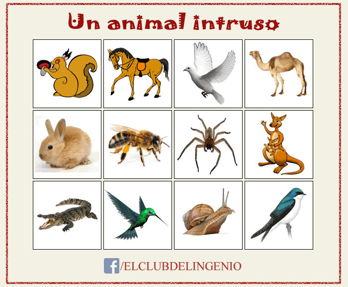 Razona y descubre al animal intruso